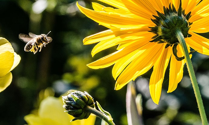 bee-smoke-free